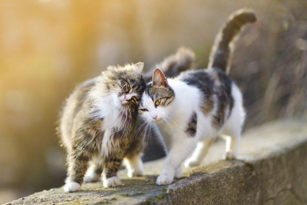Почему кошки бодаются и трутся головой и что это означает?