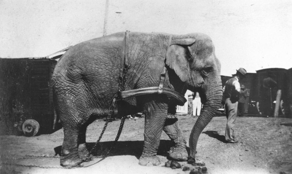 Животные, которых приговорили в свое время к смертной казни за преступления - это не шутка