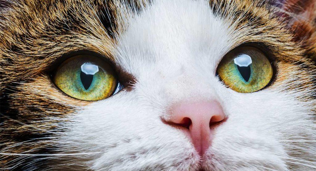 Как понять чего хочет кошка? [читаем язык тела]