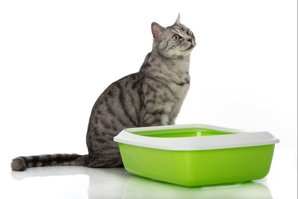 Почему коты хулиганят и что с этим делать?