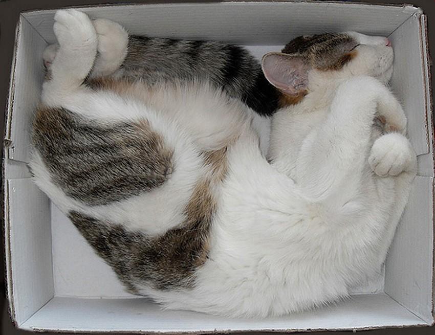 Картонная коробка вместо домика