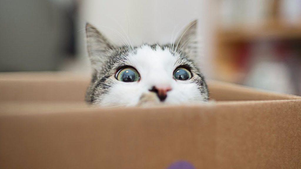 Кот спрятался от хозяина