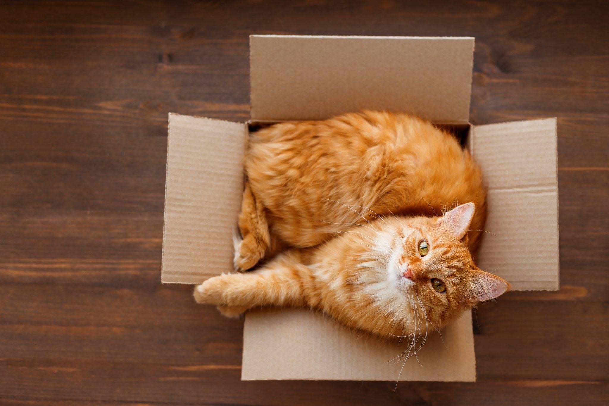 можете кликнуть кошка в ящике картинки что