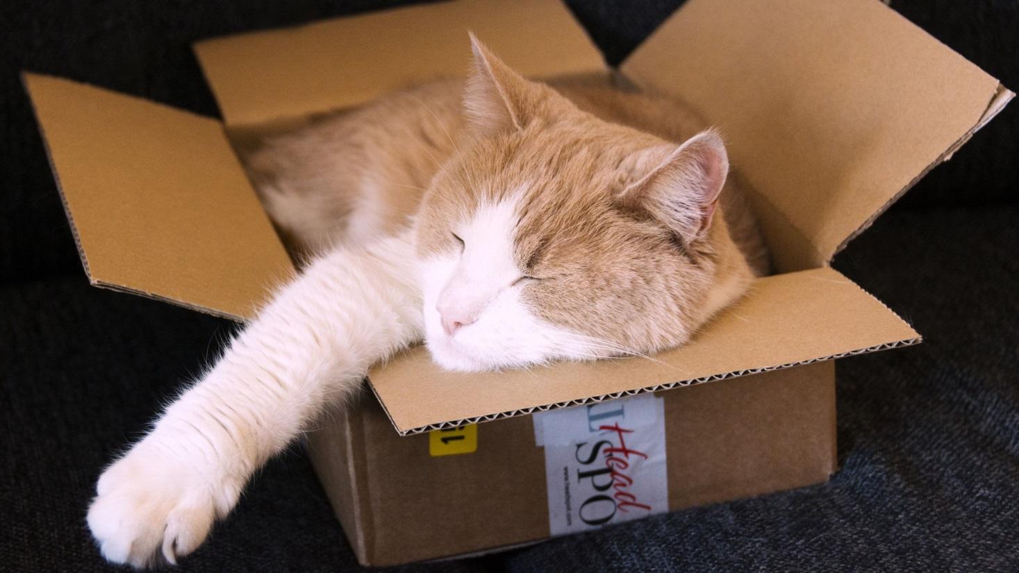 спящая в коробке кошка