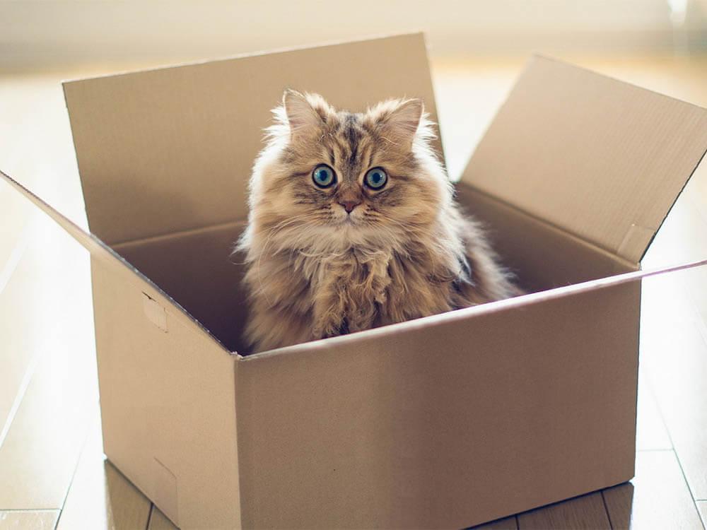 В доме появился кот
