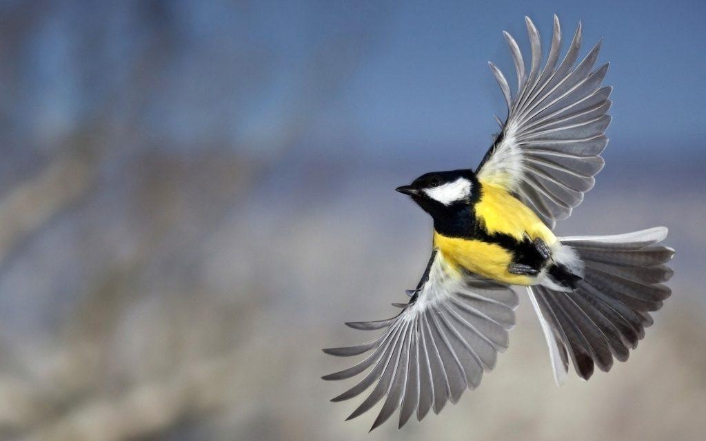 Синица: Безумный расчленитель под маской доброй птахи