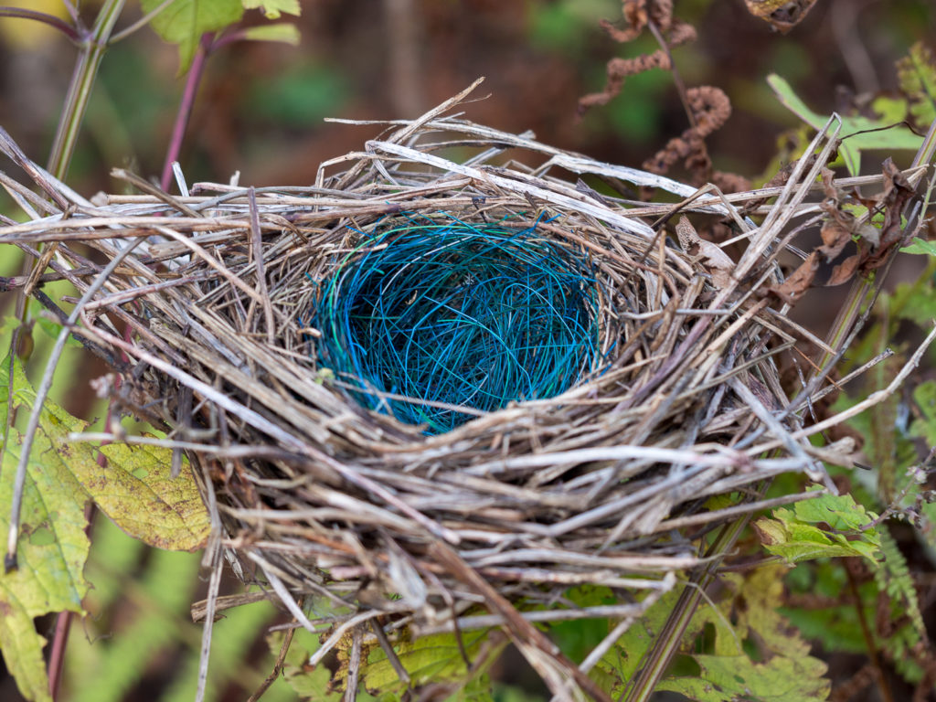 Фото красивых гнезд