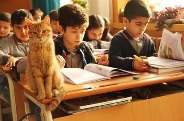 Кот Томбо: фото, история, характер, польза для детей