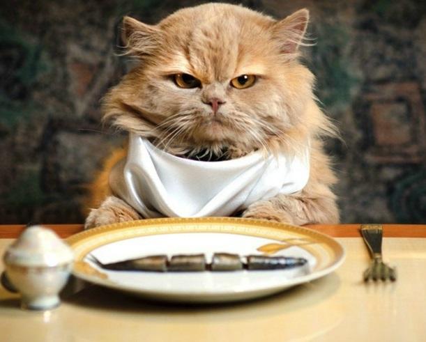 Опасные продукты для кошки: список продуктов и причины