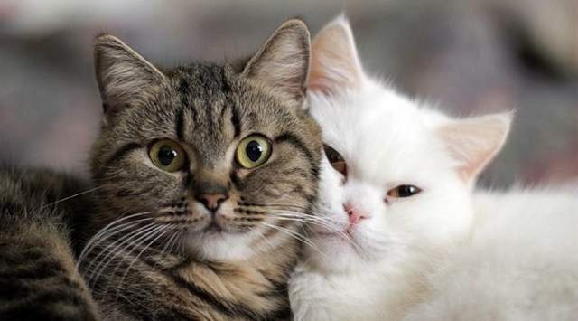 http://myaquaclub.ru/images/2017/07/cats.jpg