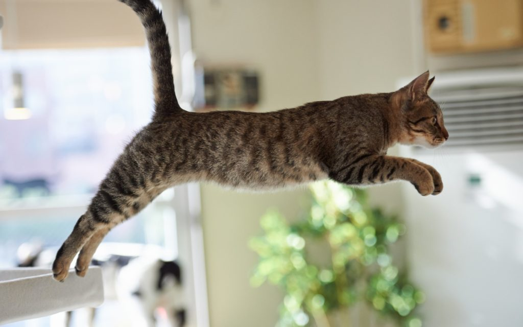 Как назвать кошку? Как выбрать имя, для любимой котейки?
