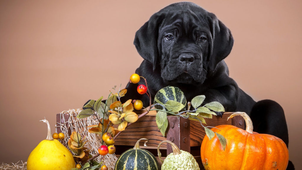 Правильное питание - залог здоровья собаки
