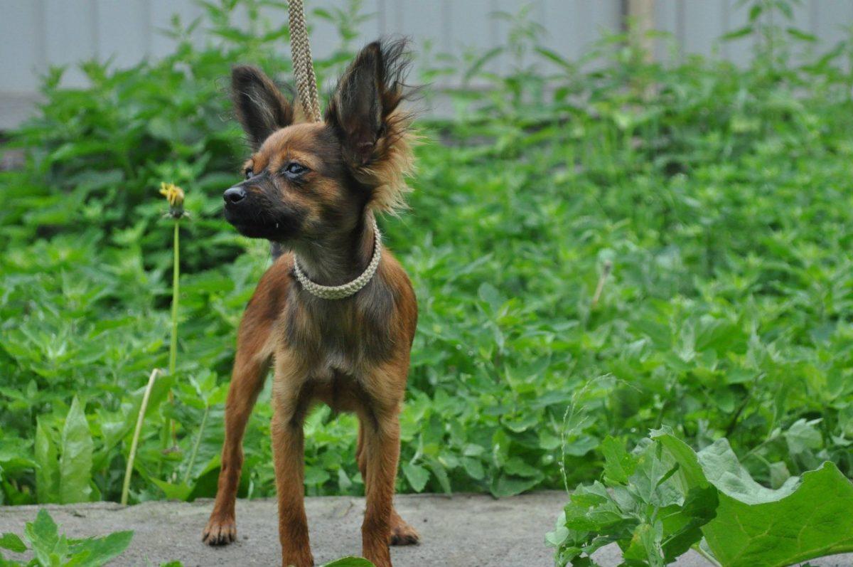 Фото собак породистых маленьких