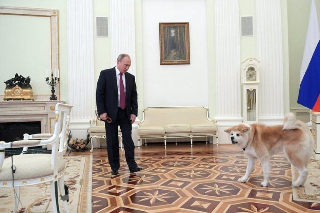 Акита-ину Юмэ - японская собака российского Президента