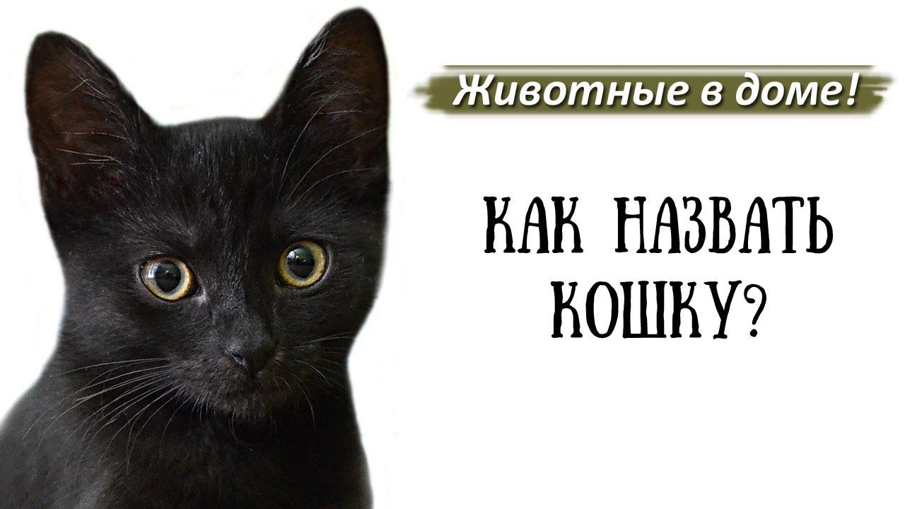 Как назвать кошку: список имен, критерии и как выбрать