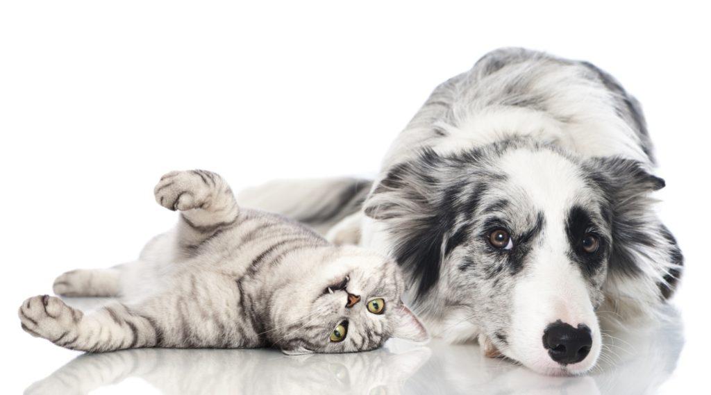 Кошки против собак: борьба за место в жилище человека. Кто лучше?