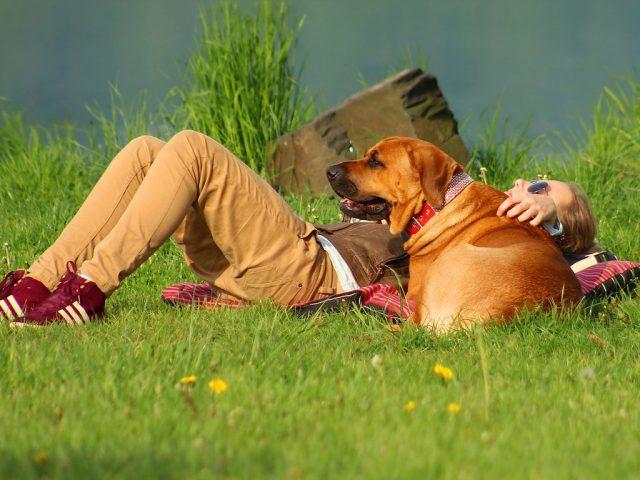 Пушистые и полезные: как животные влияют на людей