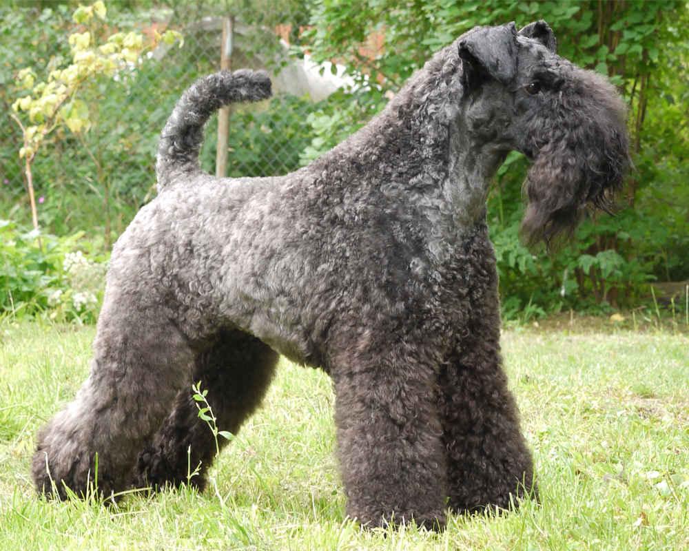 История собаки Дешика (1994-2007) - Прислано нашим читателем