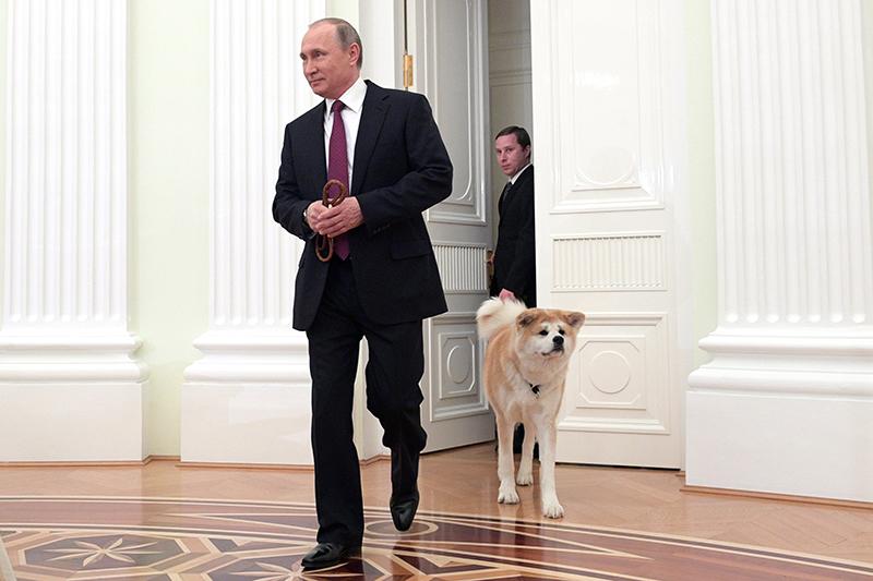 Акита-ину Юмэ: порода собаки, фото, видео, характер, история