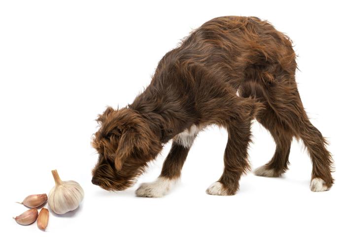 Вкусно, но вредно: 6 продуктов, которыми нельзя кормить домашних животных
