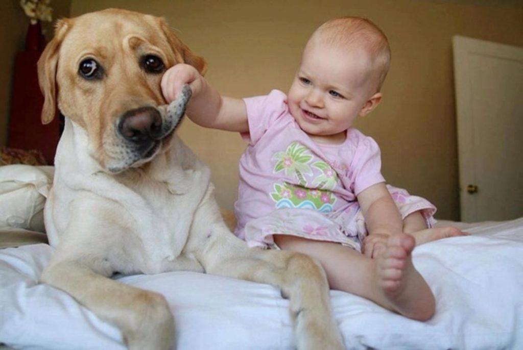 Топ самых лучших домашних животных для детей