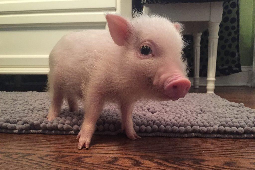 Топ 5 фактов о домашних животных