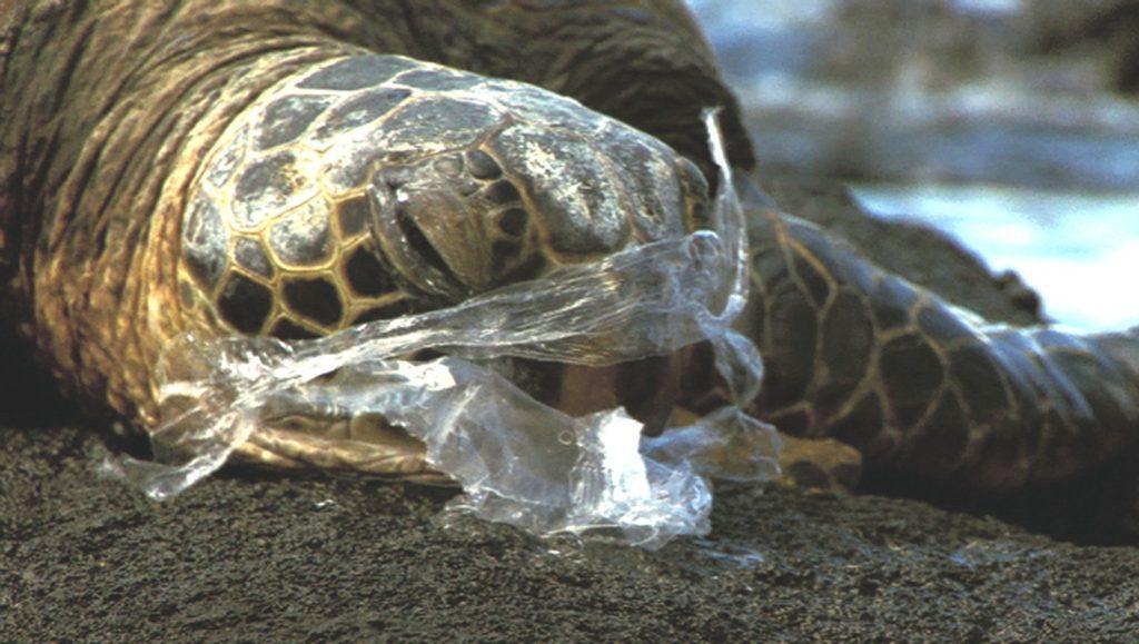 Экологическая катастрофа: Животы Китов доверху забиты пластиком!