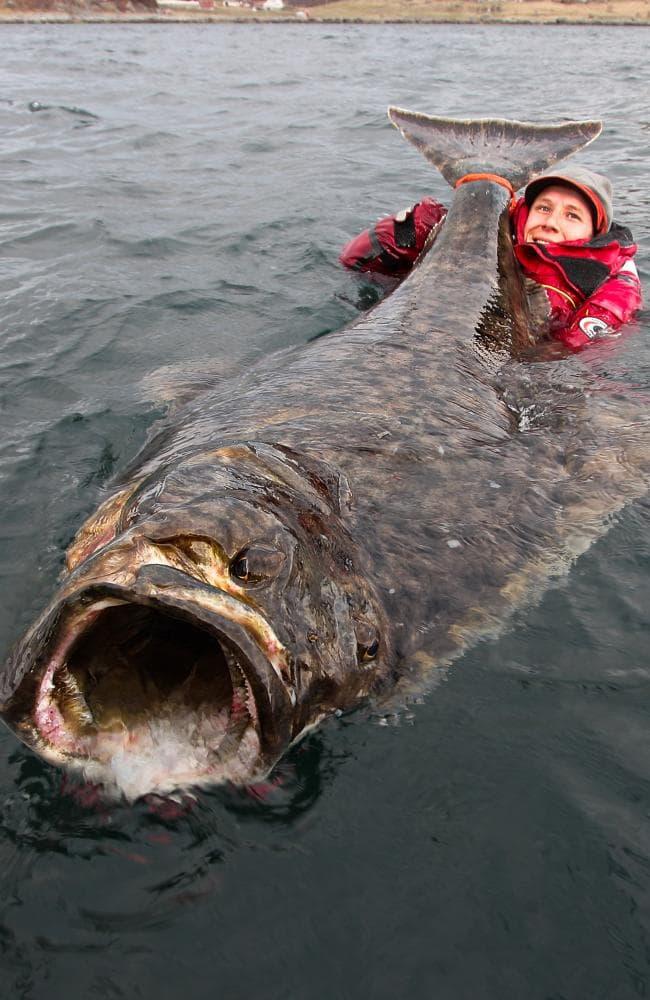 Рыба Палтус - добро пожаловать на днище! [необычный текст]