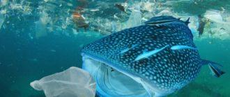 Экологическая катастрофа: киты и пластик, фото, история