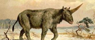 Единорог: история легенды и интересные факты