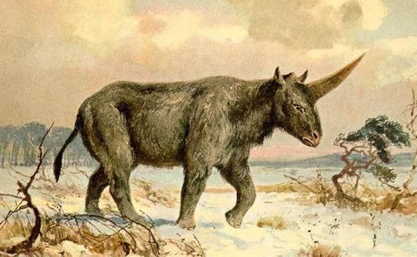 Единорог: 15 интересных фактов о легенде