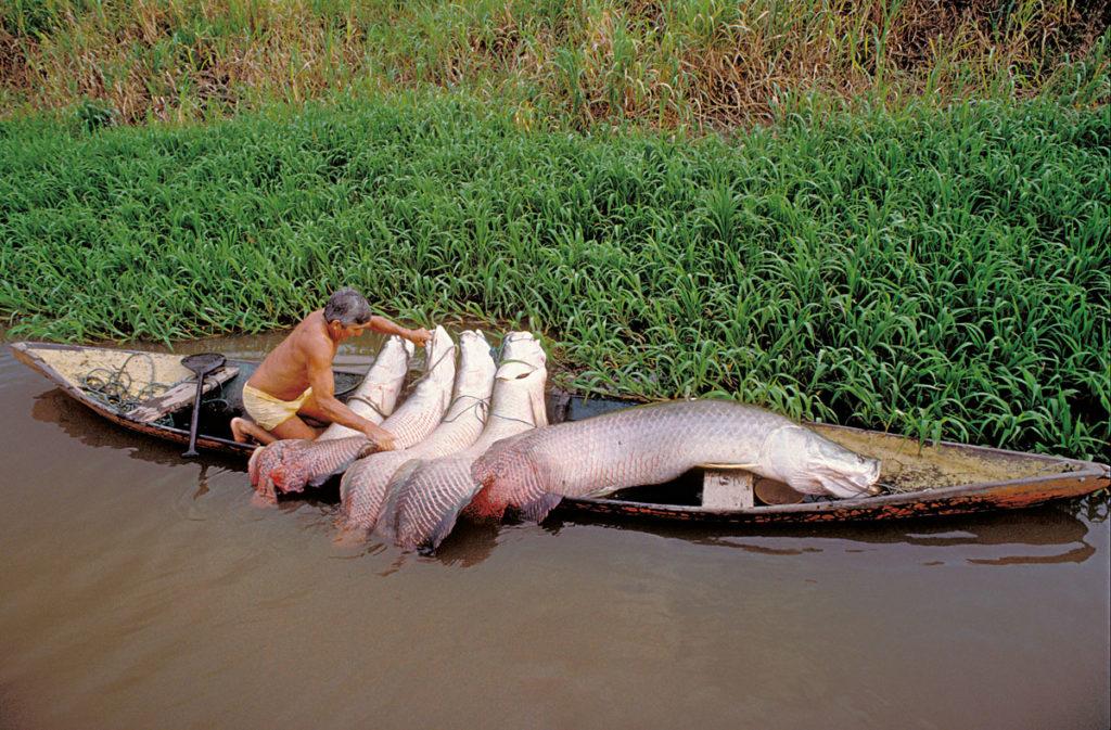 кто водится в амазонке фото въезжая