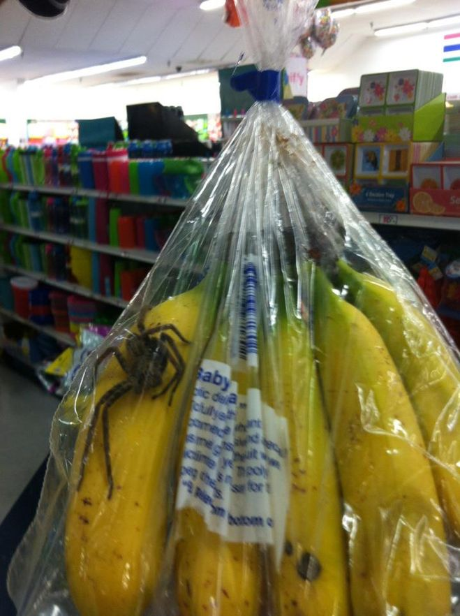 Банановый паук от Запоров и Импотенции (😉 шутка)