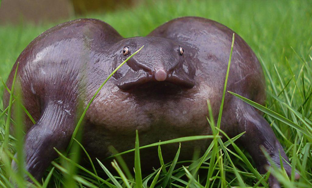 Пурпурная лягушка напоминает желе из столовой