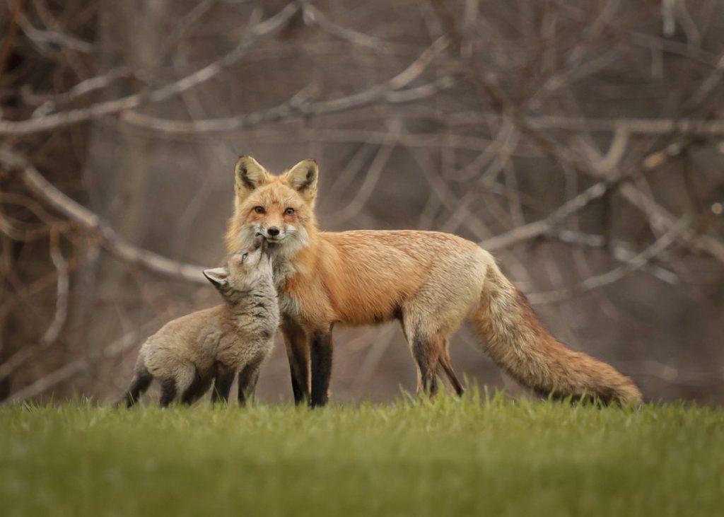 """Премия """"Отец года"""" среди животных: самые ответственные папочки в животном мире"""