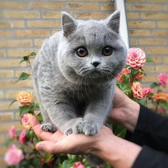 Почему НЕЛЬЗЯ обнимать и целовать котов и кошек?