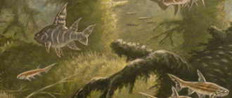 Акантоды: история, описание вида, как выглядели, особенности