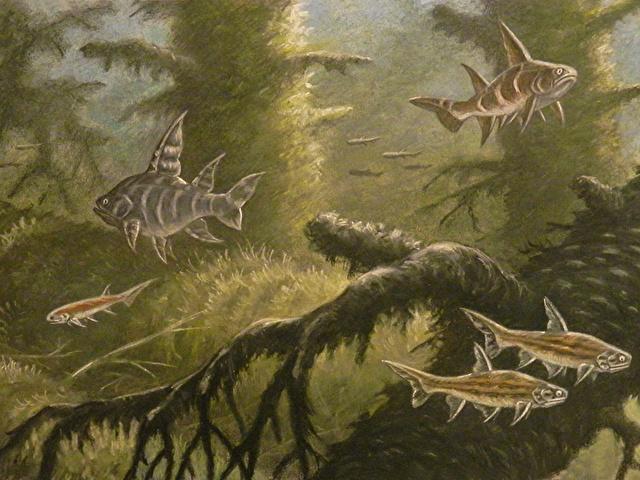 Акантоды: неудачный виток эволюции