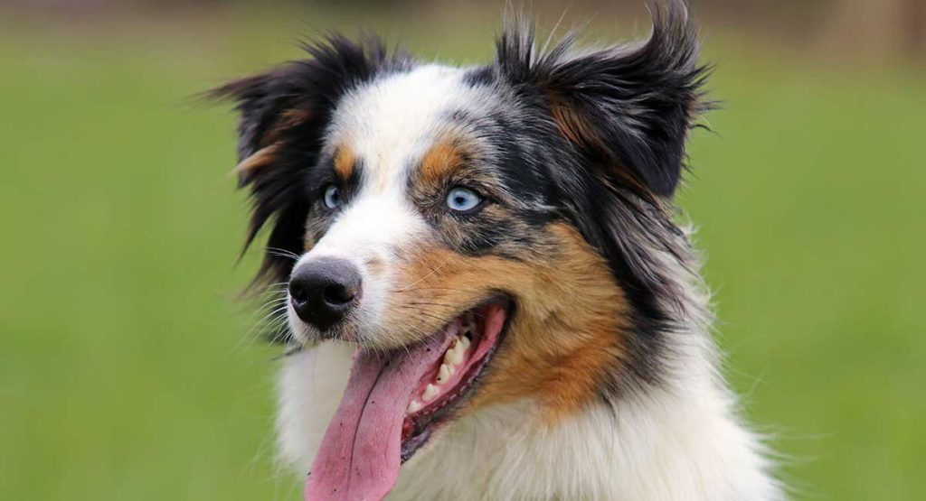 Какая порода собак подходит вам по знаку зодиака?