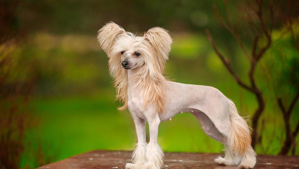 Собаки, которые НЕ ЛИНЯЮТ! Правда, или уловка маркетологов?