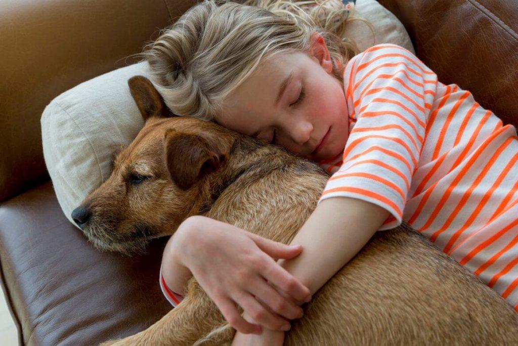 """""""Лучше бы книгу подарил."""" Почему нельзя дарить собаку: возможные последствия необдуманных подарков"""