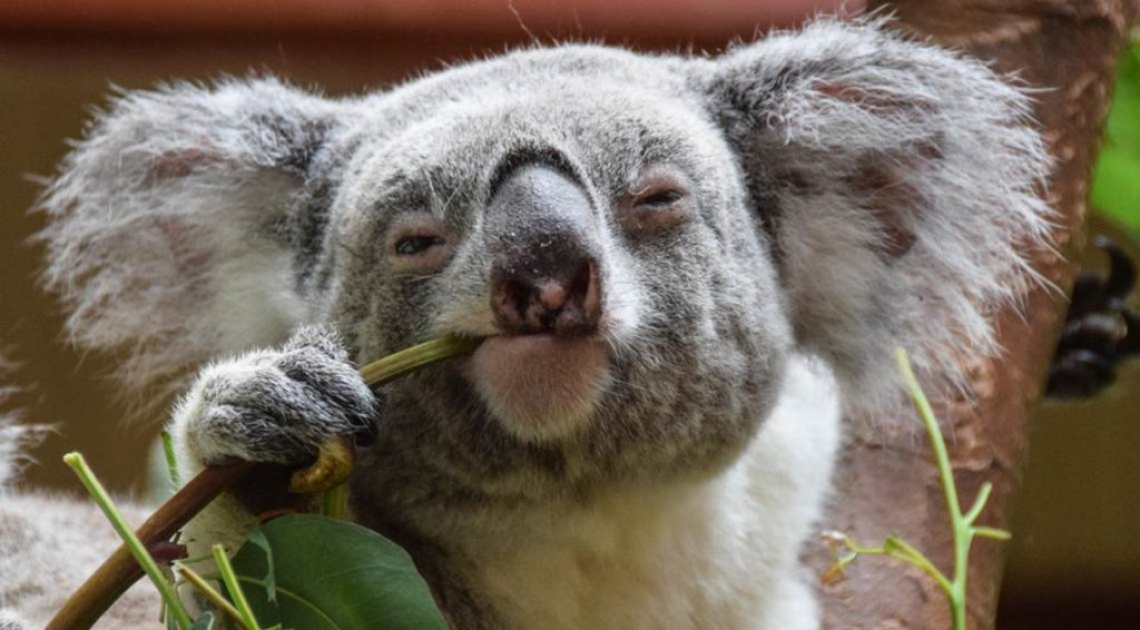 7 случайных фактов про животных