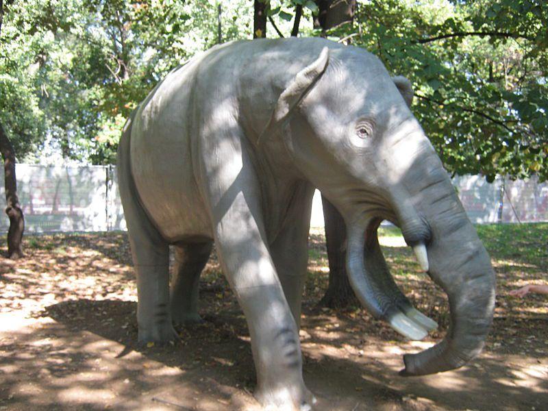 """Платибелодон: """"Слонопотам - ты ли это?!"""""""