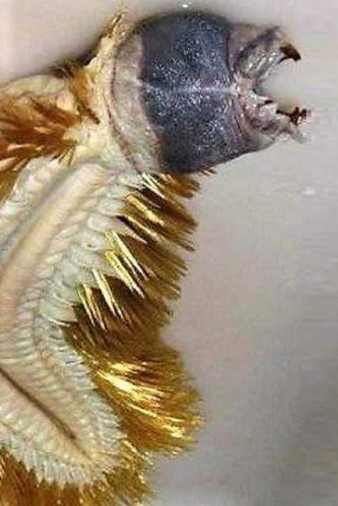 Антарктическая полихета: жуткий червь с Южного Полюса