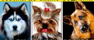 Порода собак по знаку зодиака: список знаков и пород