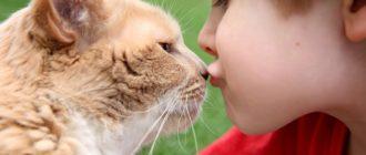 Нельзя обнимать и целовать кошек: причины, последствия