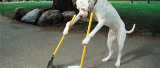 Умные породы собак: фото, названия, способности, поведение