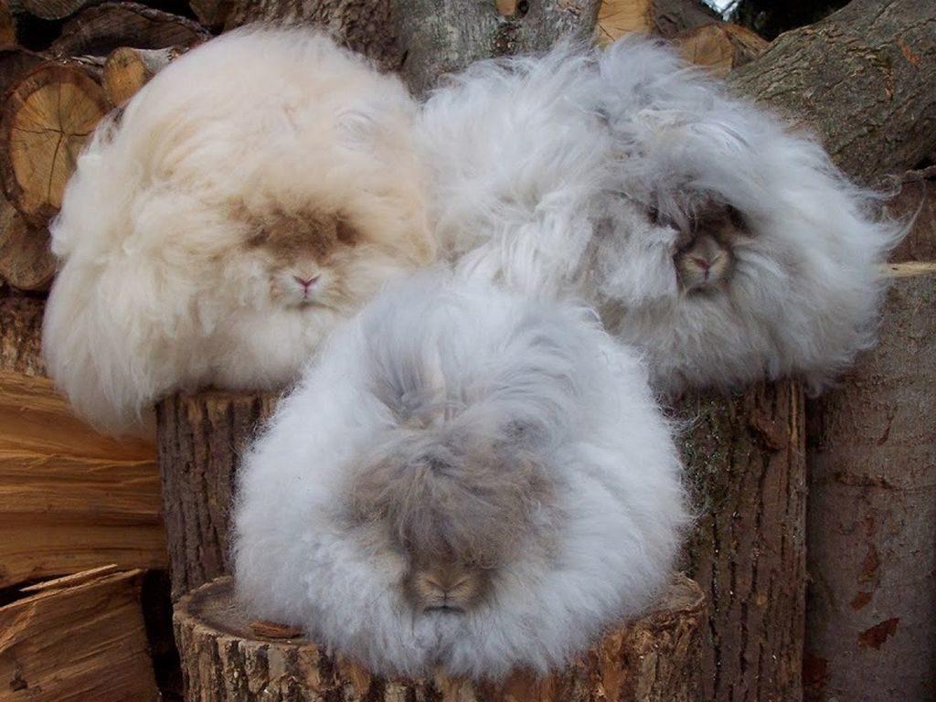 ТОП 10 Самых странных животных во ВСЕЛЕННОЙ!