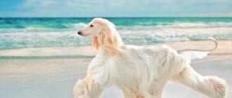 Красивые породы собак: список, названия, особенности и сравнение