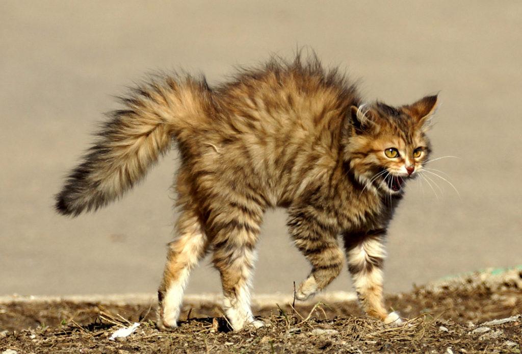 Смертельная ошибка! Почему кошек нельзя гладить против шерсти?